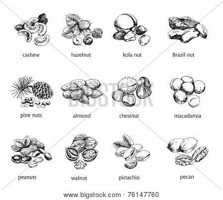 twelve kinds of nuts
