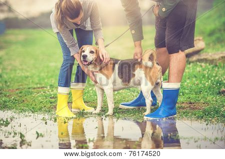 Young couple walk dog in rain