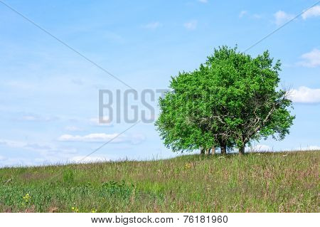 Trees In Summer