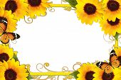Sunflower Border with butterfly and golden frame poster