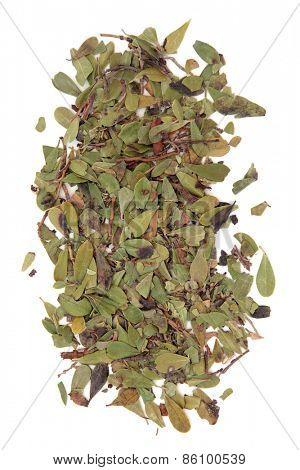 Uva ursi herb leaf sprigs over white background. Arctostaphylos.