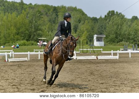Horsewoman Obstacle In Preparation