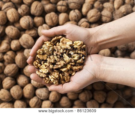 Handful of walnuts kernels against the walnuts in shell background poster