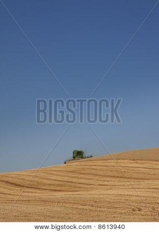 Harvesting Wheat on Hillside
