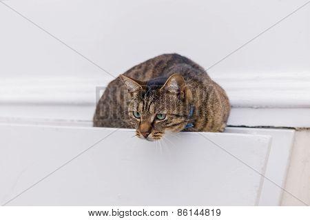 Sneaky Cat In Hanging Basket