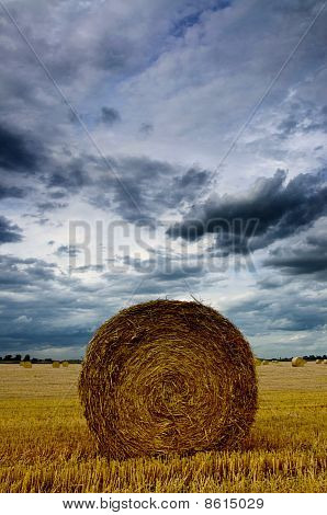 Rolled Wheat Field
