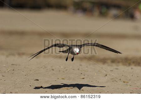 Seagull Beach Glide