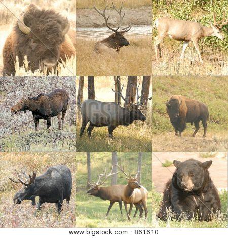 animal collage 6
