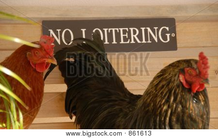 chicken  sign 2