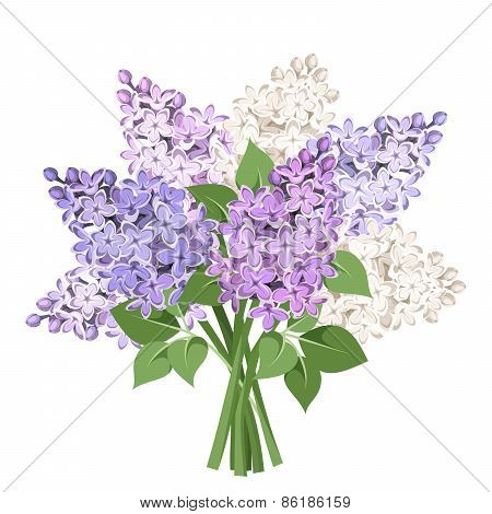 Bouquet of purple and white lilac flowers. Vector illustration.