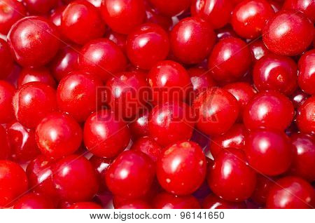 Red bright juicy downy cherry fruit closeup.Summer,July poster