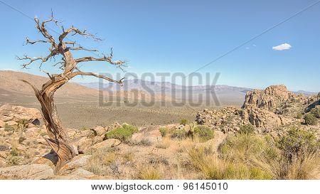 Tree Snag, Teutonia Peak Trail, Mojave National Preserve, CA
