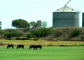 group of horses grazing in a green pasture next to a grain silo poster
