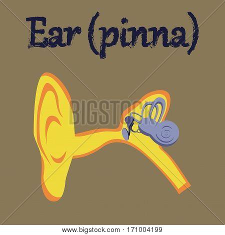 human organ icon in flat style ear