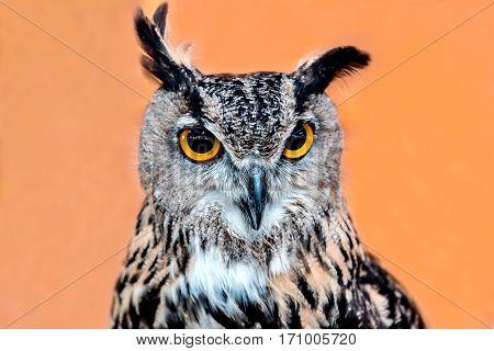 owl night bird in the forest, wildlife