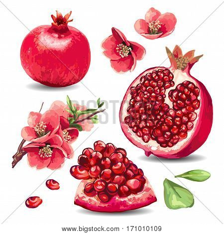 Fruit Pomegranate and pink flowers. Isolated element.