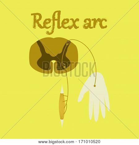 human organ icon in flat style reflex arc