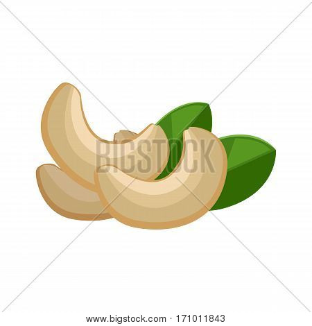 Illustration of cashew nuts. Ripe cashew nuts with leaves in flat. Cashew on white background. Several cashew kernels. Healthy vegetarian food. Isolated vector illustration on white background.