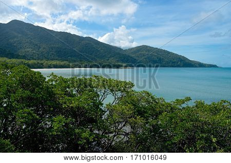 daintree national park in north queensland australia along cape tribulation coast