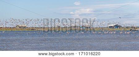 Group Of Sanderling At Lagoa Do Peixe
