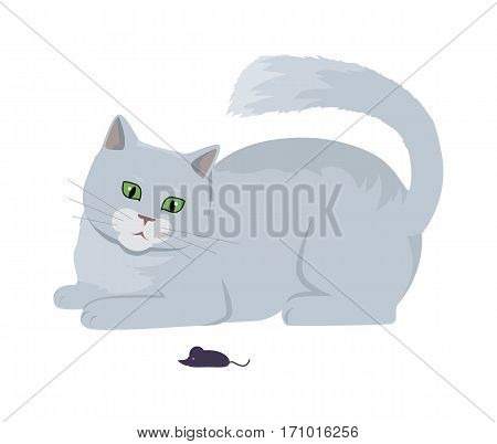 Cat with mouse, Cute grey cat playing with toy flat vector illustration isolated on white background. Purebred pet. Domestic friend and companion animal. For pet shop ad, hobby concept, breeding