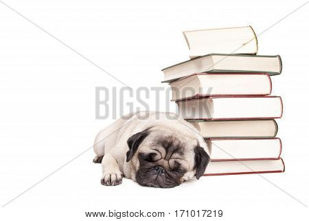 adorable pug puppy dog tired of reading lying down sleeping next to pile of books isolated on white background