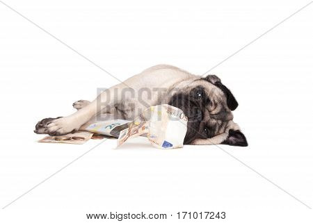 cute small pug puppy dog lying down on floor rolling and playing with euro paper money and coins on white background