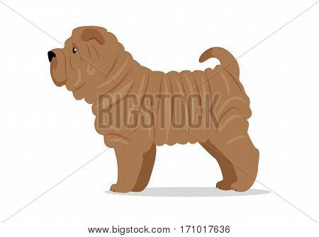 Brown shar pei in stand on white background. Dog icon or logo element. Vector illustration in flat style. Side view shar pei design. Cartoon dog character, pet animal.
