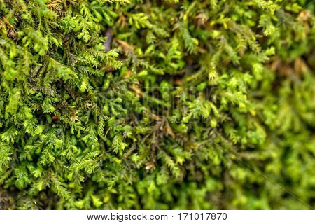Close-up of beautiful green moss covered timber surface
