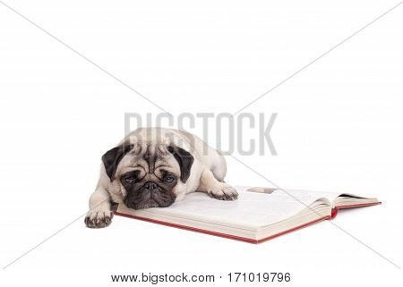 cute little pug puppy dog is lying down on a book isolated on white background