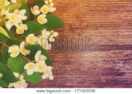 Jasmine fresh flowers and leaves border on wooden table, retro toned