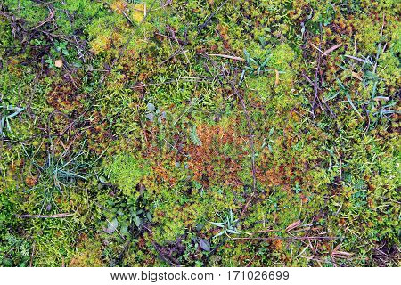green and yellow moss summer nature background