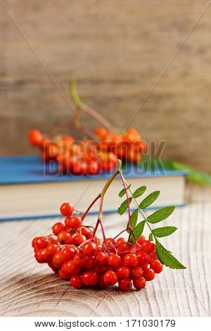 Rowanberry or ashberry on a wooden board, selective focus.