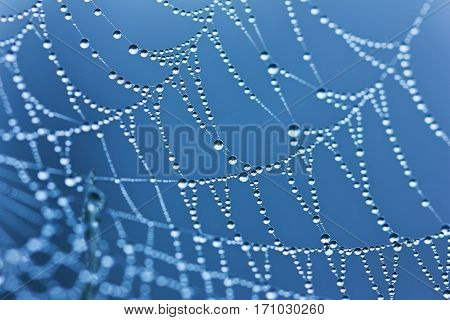 Spider web or cobweb with water drops after rain against a blue sky. Selective focus and shallow depth of field.