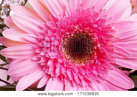 Beautiful Pink Flower close up Petal, Blooming, Tree, Winter, Japanese, Japan, Evergreen, Camellia, Japonica
