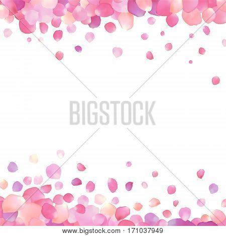 white background with pink rose petals on edges
