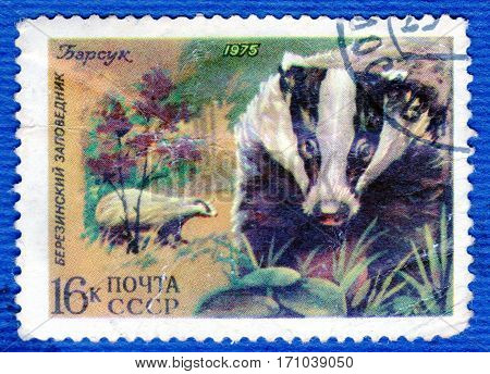 USSR - CIRCA 1975: Postage stamp printed in USSR with a picture of badger, of the series