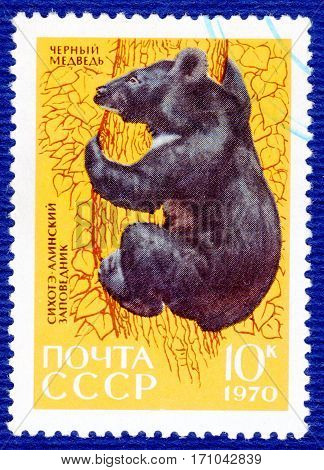 USSR - CIRCA 1970: Postage stamp printed in USSR with a picture of Asiatic black bear (lat. Ursus americanus), of the series