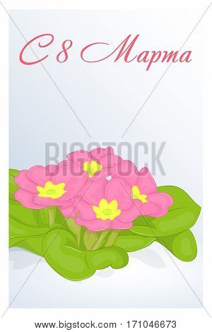 Beautiful congratulation or greeting card for women's day with Primula in snow. Russian translation: 8 March. Holiday greetings background in simple cartoon style. Vector illustration. Flower Collection.