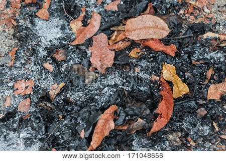 Closeup to Pile of Leaves Ash Background