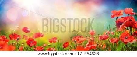 Poppies Field At Sunset - Spring red background