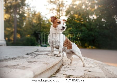 Cute Dog Portrait In Autumn Outsude