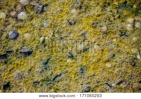View of salty lake bottom with bubbling algae and shells, abstract nature background
