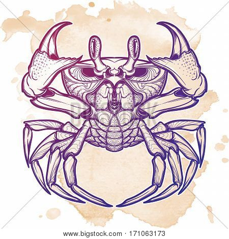 Cancer. Accurate symmetrical drawing of the beach crab. Concept art for tattoo, horoscope, sea food business. Isolated on grunge Linear drawing itolated on white background. EPS10 vector