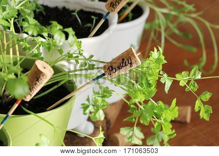 Herbs with markers growing in pot .