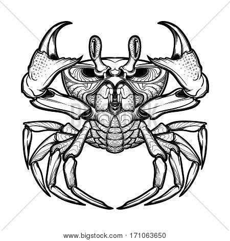 Cancer. Accurate symmetrical drawing of the beach crab. Concept art for tattoo, horoscope, sea food business. Coloring book illustration. Linear drawing itolated on white background. EPS10 vector