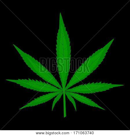 Realistic Cannabis green leaf on black background.