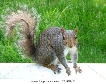 Hopeful Squirrel