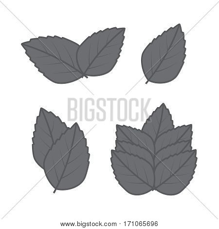 Mint hand sketch vector illustration. Peppermint engraved drawing of menthol leaves.