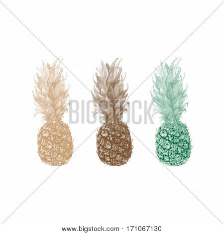 Photo realistic illustration of a pineapple ananas in three color schemes. Could be used as decoration for web design polygraphy or textile